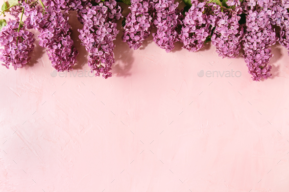 Lilac flowers over pink - Stock Photo - Images