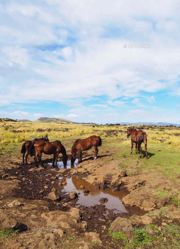 Horses on Easter Island, Chile - Stock Photo - Images