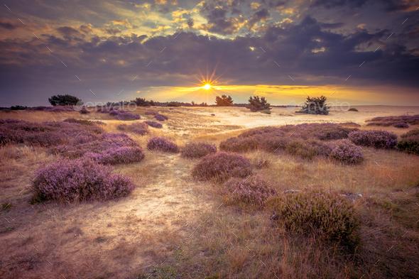 Hoge Veluwe Sand Heathland in retro colors - Stock Photo - Images