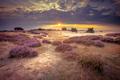 Hoge Veluwe Sand Heathland in retro colors - PhotoDune Item for Sale