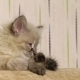 Little Cute Kitten Lying on the Couch - VideoHive Item for Sale