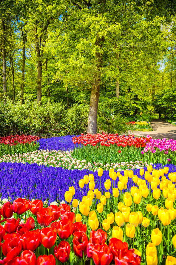 Tree and tulip flowers in spring garden. Keukenhof, Netherlands, - Stock Photo - Images