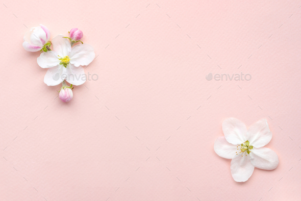 Apple blossom on a pink background with empty space for text - Stock Photo - Images