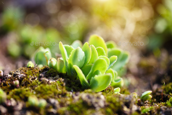 Spring sprouts of young leaves. Sunny day - Stock Photo - Images