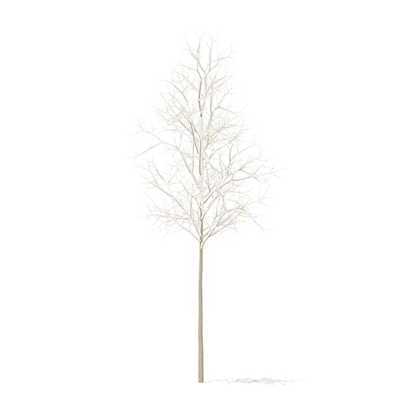 Quaking Aspen with Snow 3D Model 2.6m - 3DOcean Item for Sale