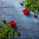 Red peonies on blue wooden background - PhotoDune Item for Sale