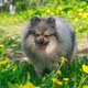 Small dog walks in the garden - PhotoDune Item for Sale