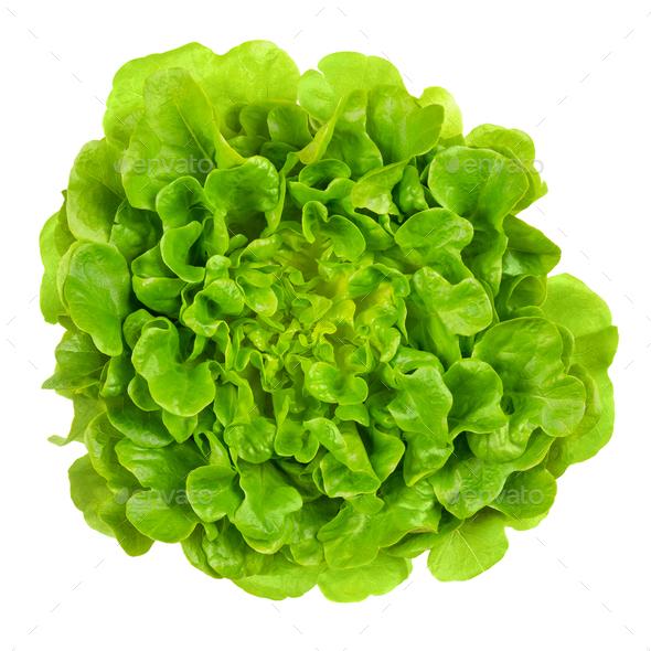 Salanova green oak leaf lettuce from above over white - Stock Photo - Images