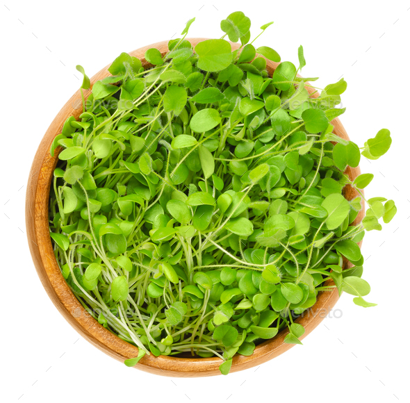 Crimson clover microgreen in wooden bowl over white - Stock Photo - Images