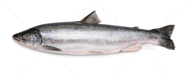 Fresh arctic char - Stock Photo - Images