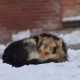Homeless Dog Freezes on the Snow near the Building - VideoHive Item for Sale
