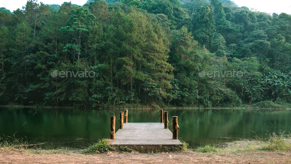 Wooden bridge in middle of the forest - Stock Photo - Images