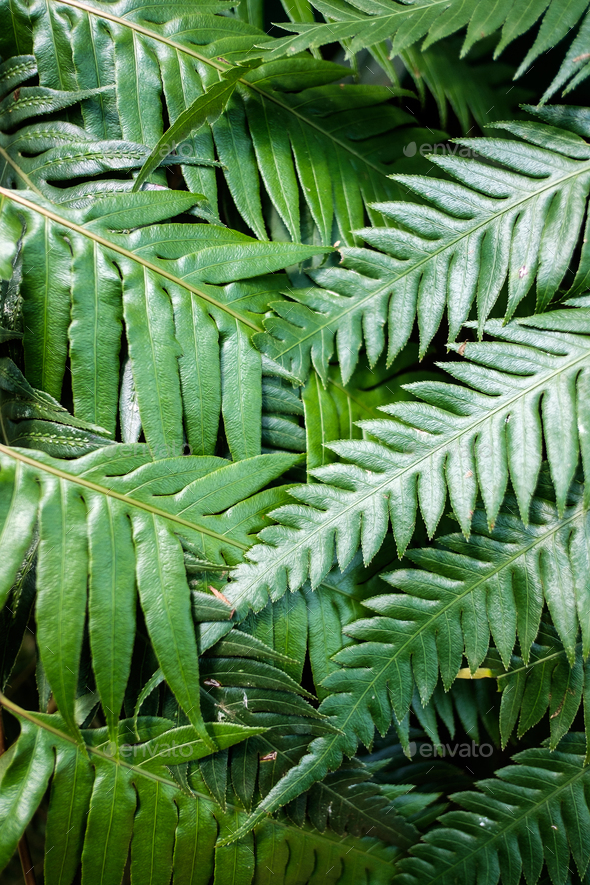 Closeup of Refreshing Fern Leafs - Stock Photo - Images