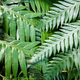 Closeup of Refreshing Fern Leafs - PhotoDune Item for Sale