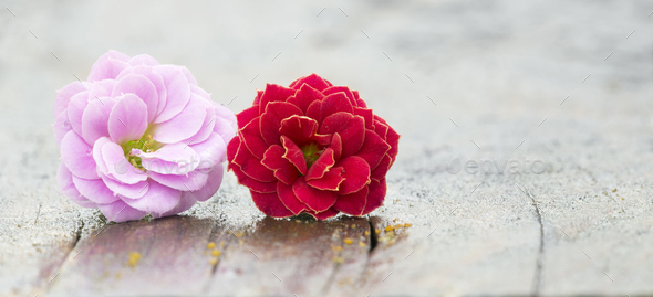 Pink and red flowers on wooden background - Stock Photo - Images