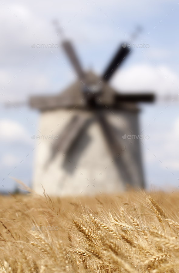 Cereal field background - Stock Photo - Images