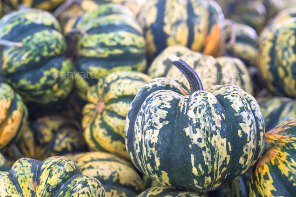 Bunch of green pumpkins for sale-4 - Stock Photo - Images