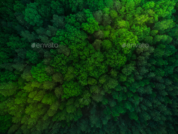Colorful trees in spring forest,top down aerial - Stock Photo - Images
