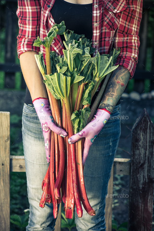 Tattooed authentic gardener holding rhubarb - Stock Photo - Images