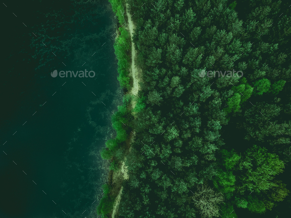 Forest and lake border, toned image from above - Stock Photo - Images