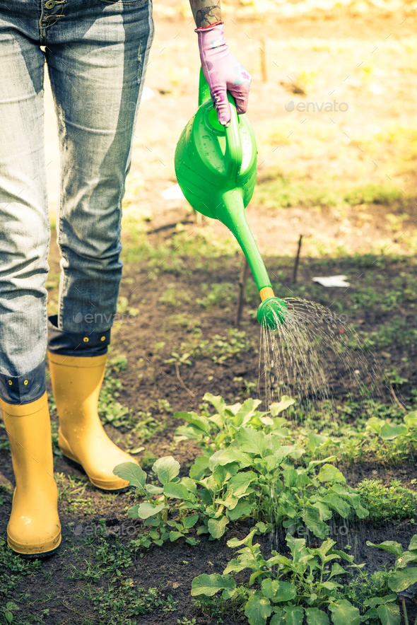 Tattooed woman watring plants in garden wearing wellies - Stock Photo - Images