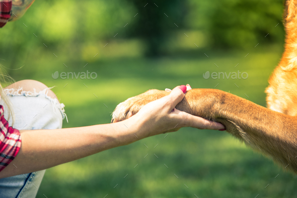 woman hold dog paw,friendship and love concept - Stock Photo - Images