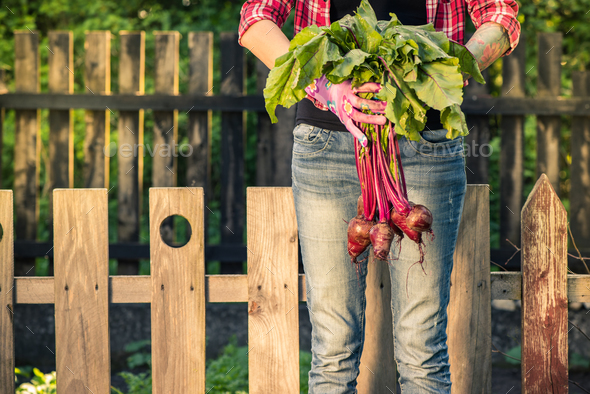 Young casual woman holding fresh beetroot in garden - Stock Photo - Images