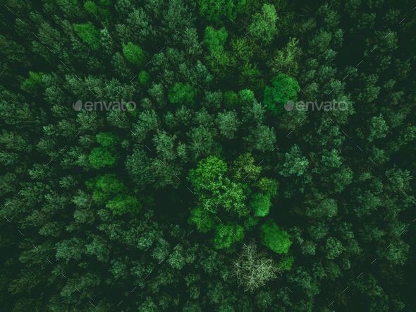 aerial view over forest at spring - Stock Photo - Images