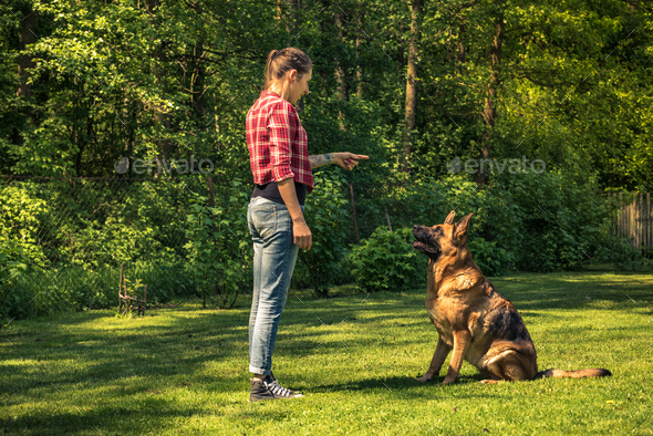 Young woman train german shepherd dog to sit - Stock Photo - Images