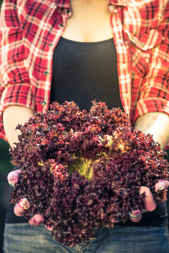 Young woman holding red lettuce in garden - Stock Photo - Images