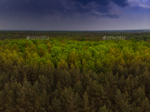 Thunderstorm over wild forest at spring,aerial drone - Stock Photo - Images