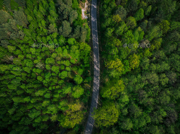 Empty road trough spring pine forest,aerial - Stock Photo - Images