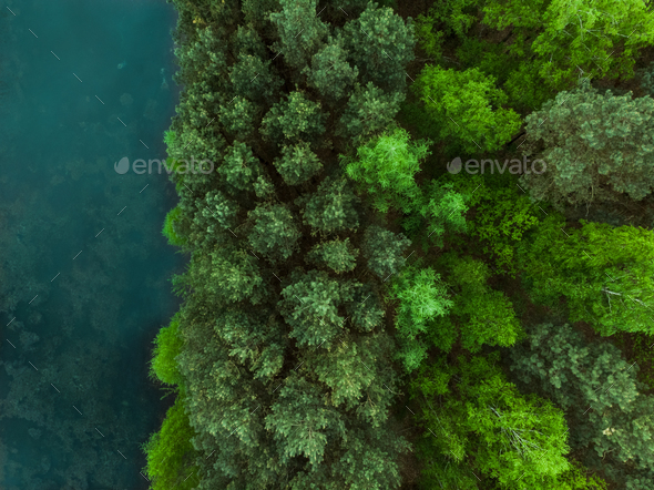 Young forest from above - Stock Photo - Images
