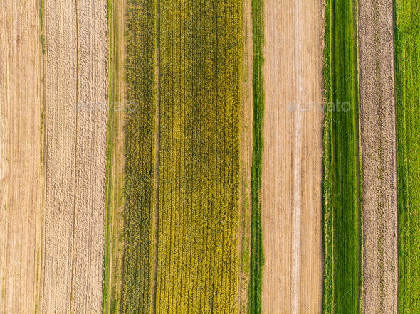 Narcissus fields and cultivate soil,aerial - Stock Photo - Images