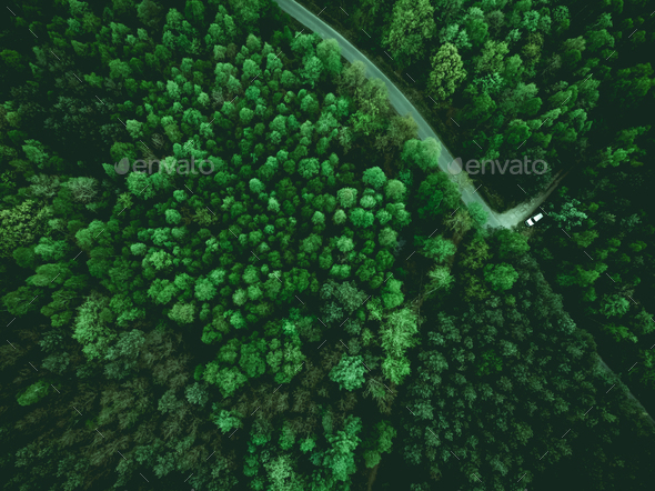 Wild forest and wonderlust car on road, aerial from above - Stock Photo - Images