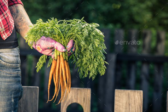 Candid and casual gardener holding carrot - Stock Photo - Images