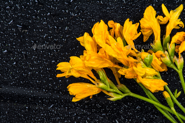 Yellow garden flowers, copy space - Stock Photo - Images