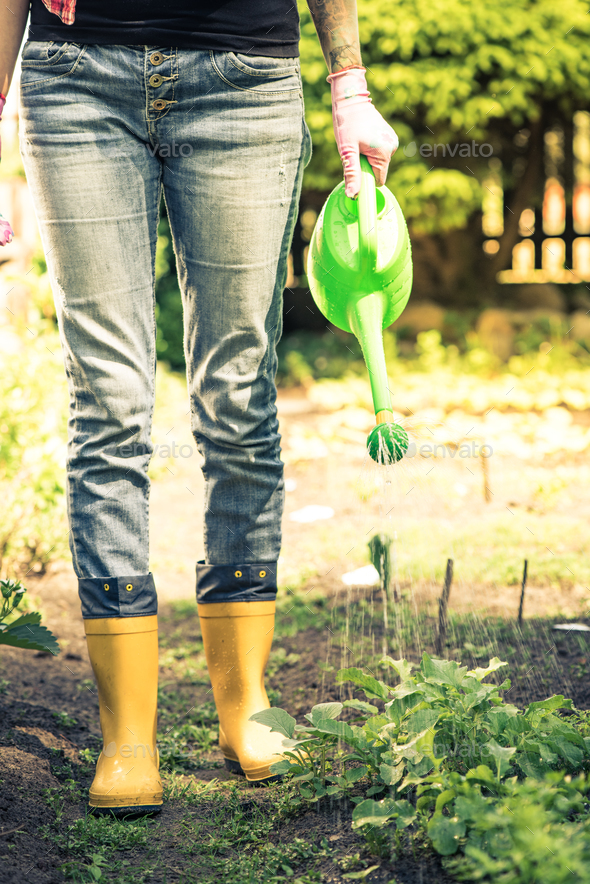 Young woman watering vegetables in wellies - Stock Photo - Images