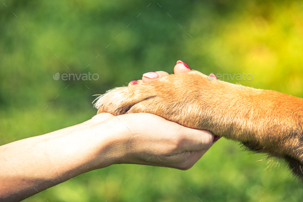 hand holding dog paw, relationship and love concept - Stock Photo - Images
