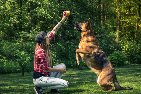 Dog jump for ball, friendship with owner - Stock Photo - Images