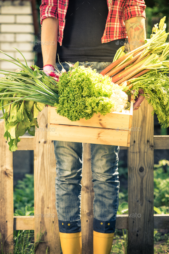 Real people concept, gardener with vegetables - Stock Photo - Images