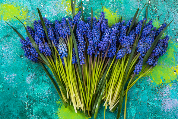 Bunch of fresh cut hyacinth flowers on colorful background - Stock Photo - Images