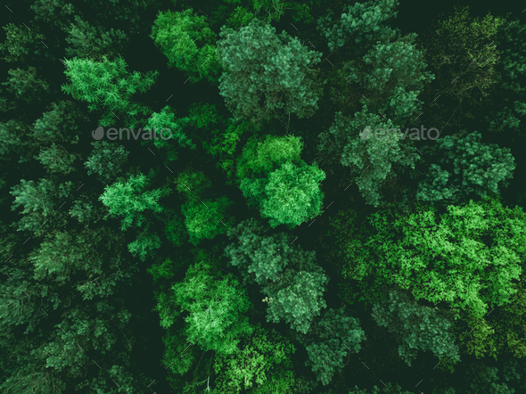 Low flight over young forest at spring - Stock Photo - Images