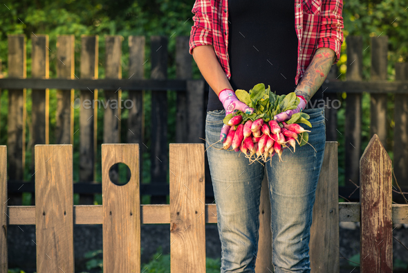 Young tattooed woman holding fresh radish - Stock Photo - Images