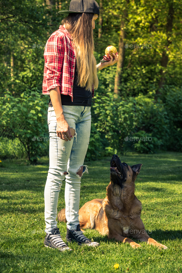 German shepherd obedience training by woman in garden - Stock Photo - Images