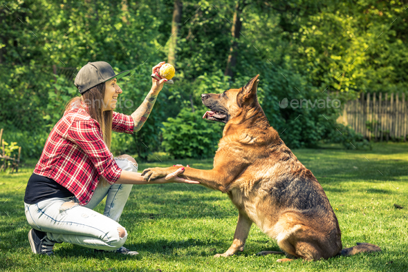 Woman and dog friendship, owner and pet - Stock Photo - Images