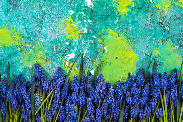 Blue spring flowers on colorful background - Stock Photo - Images