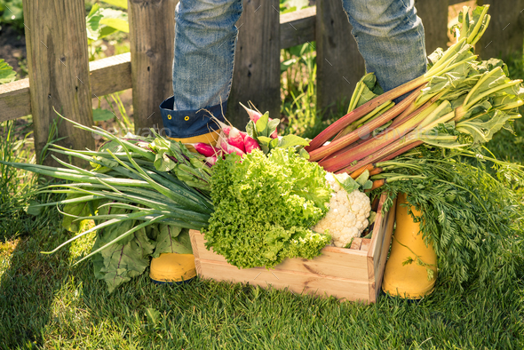 Yellow wellies and vegetables - Stock Photo - Images