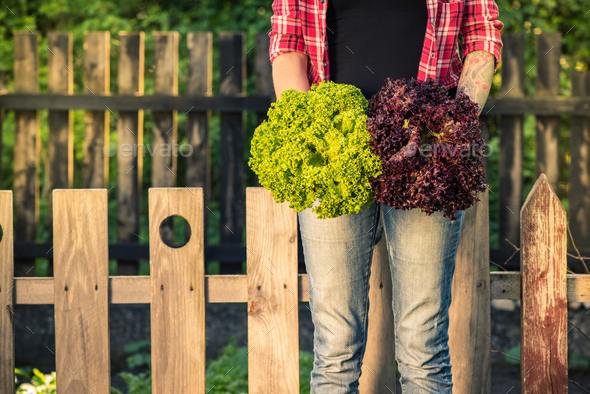 Authentic young woman holding lettuce in garden - Stock Photo - Images
