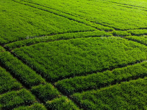 Sunrise over green farming field,drone view - Stock Photo - Images